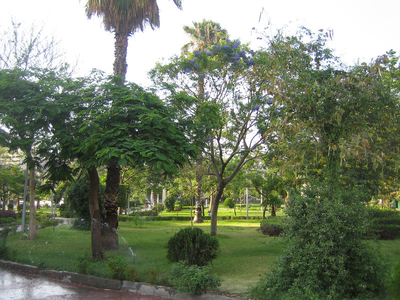 31 - green cairo