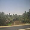 04 - trees