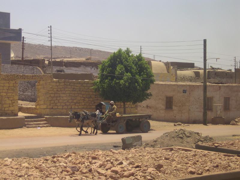 14 - donkey