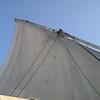 099 - felucca sail