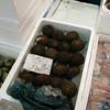 005 - sea urchin