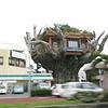 003 - tree house restaurant