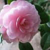 020 - flower