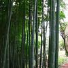 09 - bamboo