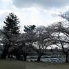 08 - trees