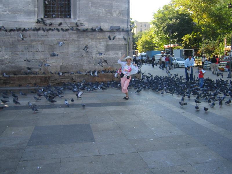 001 - birds