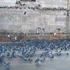 002 - birds