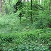 badenforest