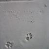 018 - lassie