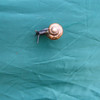 01 - snail on tent