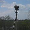 2 - bird nest