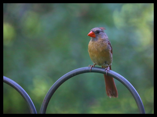Backyard Birds, Solon, Ohio