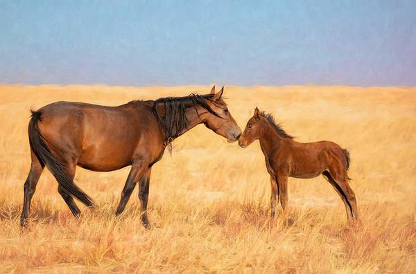 Wild Horses, Dugway, Utah