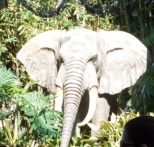 Jungle Cruise Bull Elephant