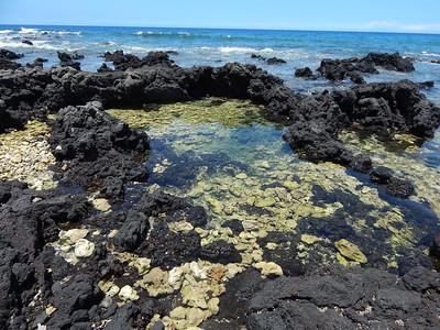 Coral Lava Pool