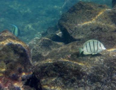 Pahoa Reef