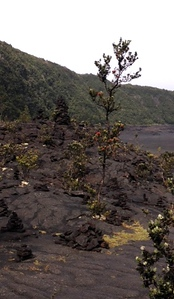Ohio Lehua at Kilauea Iki