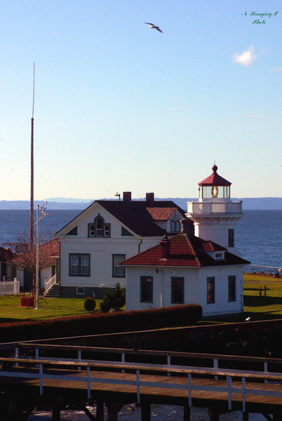 Mukilteo Lighthouse Feb. 2009  How many gulls can you find?