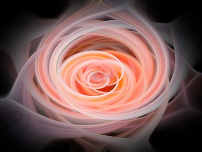 My Pink Rose and Abstracts