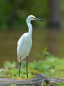 Pacaya-Samiria National Reserve - Peru
