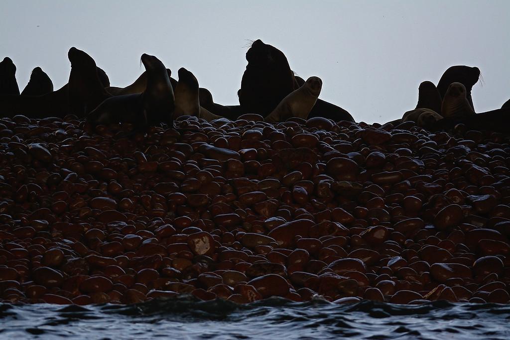 Paracas National Reserve - Peru