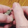 Calliope Hummingbird <br /> Ozark, Mo <br /> 11/15/14 4:13 pm