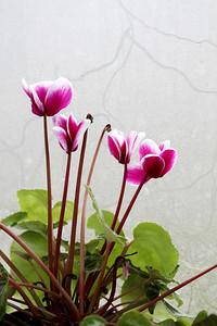 Pencerenin önündeki çiçekler