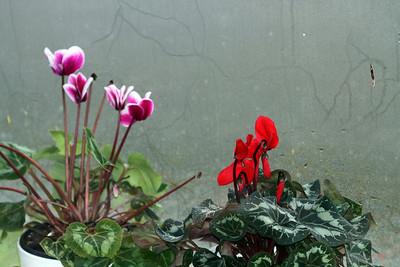 Pencere önü çiçekler