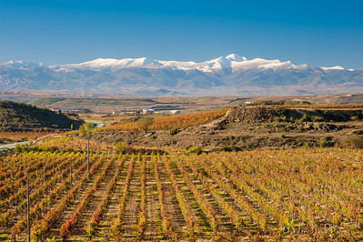 Vineyards and the Pyrenees