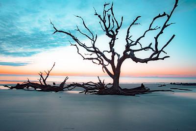Driftwood Beach Sunrise # 1
