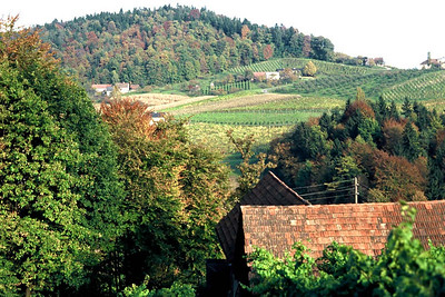 Southern Graz, Wine yards, 1977