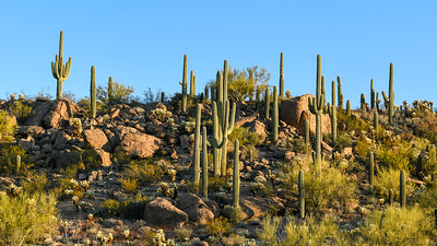 Saguaro National Forest