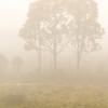 Misty Morning in Australia
