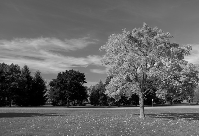 This is my B&W fall shot