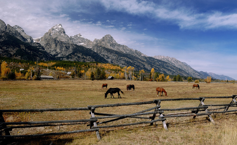 Horse Ranch At The Grand Teton National Park,Wy