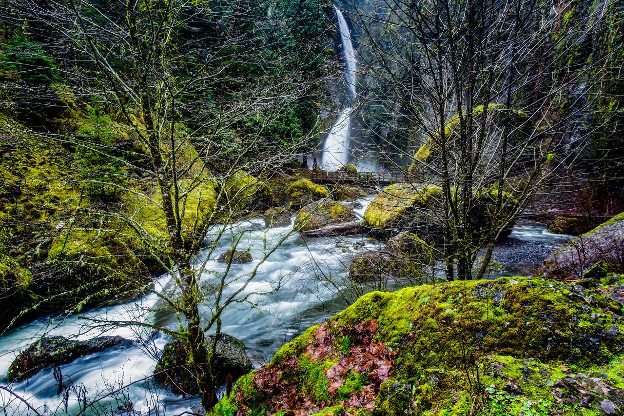Through the Trees Wachlella Falls Trail