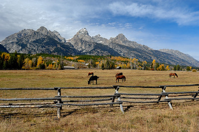 Horse Ranch At The Grand Teton National Park,Wy Photo #128