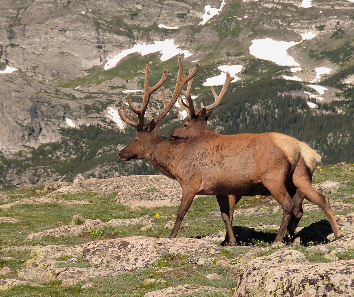 Rocky Mountian National Park<br /> Photo # 2
