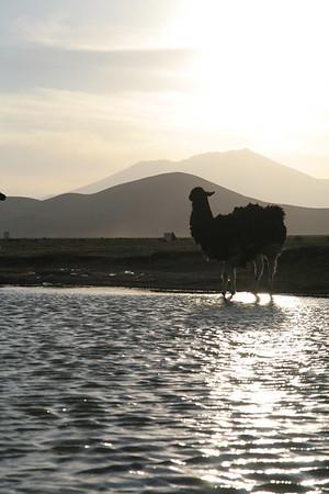 Bolivia: Jeep Tour in Southwest Bolivian Altiplano