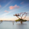 CL 75 Morning Mangroves