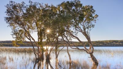 NSI 40 Brown Lake Sunrise