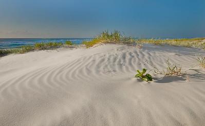 NSI 14 Sand Dune Sunrise