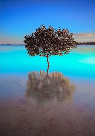 VP 21 Aquamarine Morning