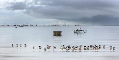 VP 59 Birds & Boats