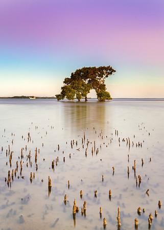 VP 57 Dusk on the Mangroves