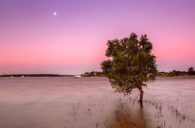 VP 56 Mangrove Dusk