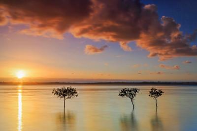 WP 59 Mangrove Sundown