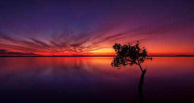 WP 93 Mangrove Evening