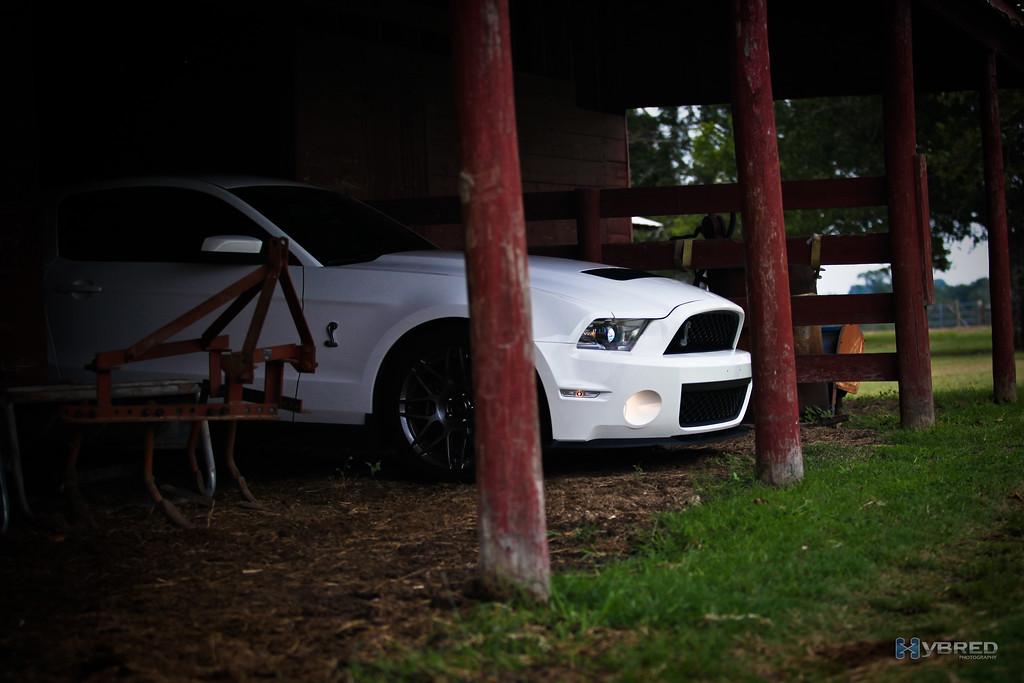 Pony in the barn, Cat Springs TX