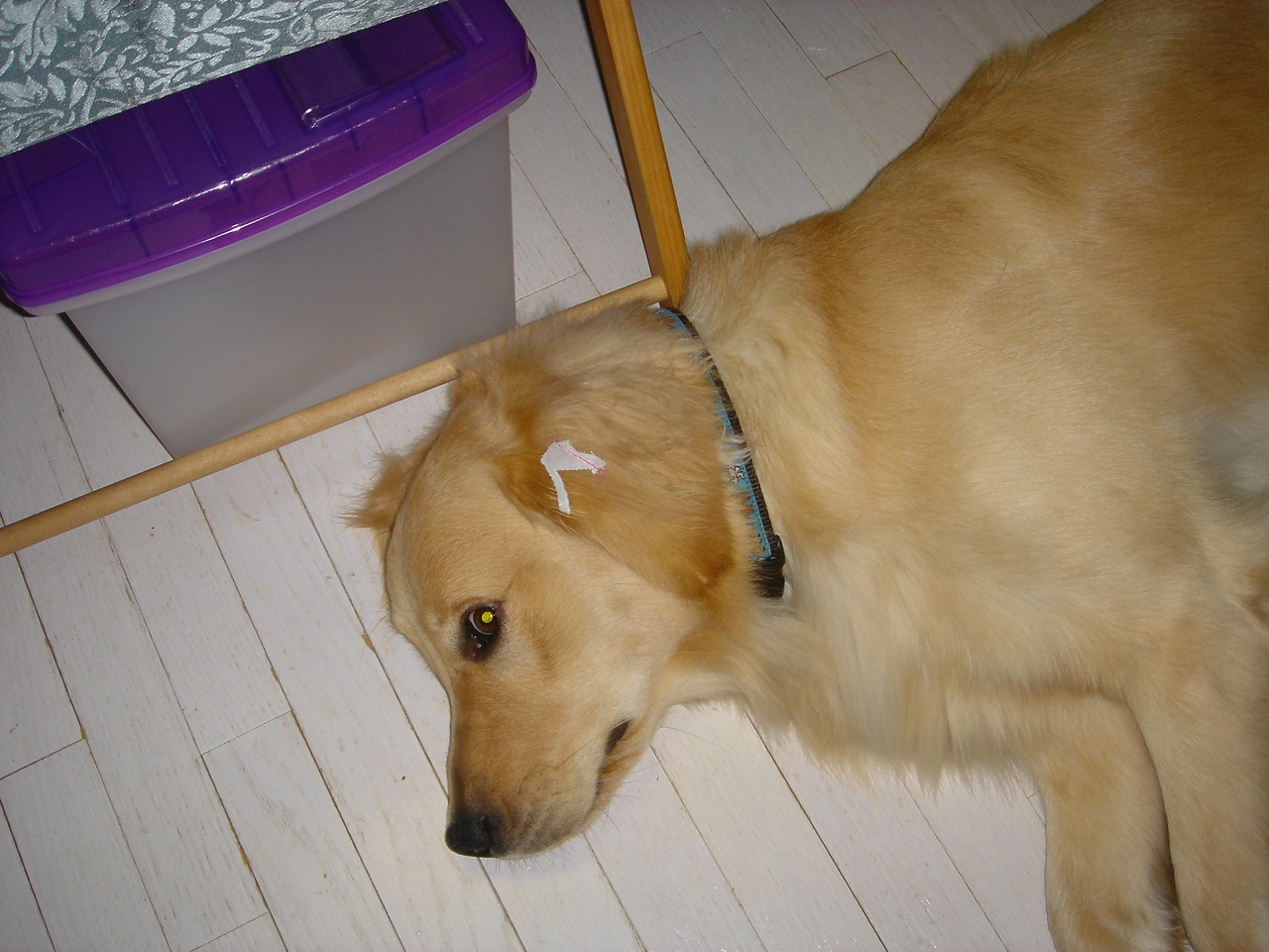 Sewing room dog